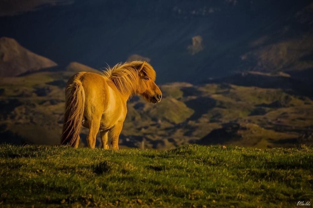 03_Slncový kôň