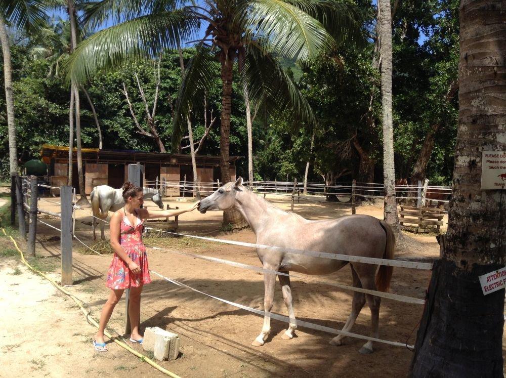 koník na Seychelách