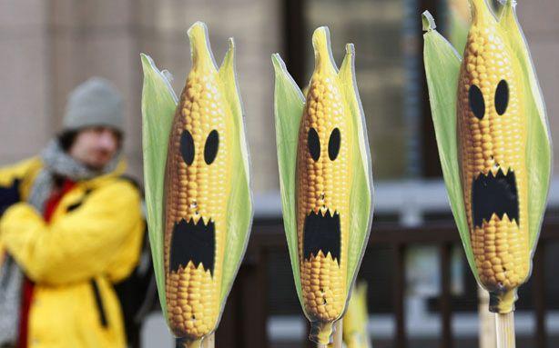 corn-hysteria