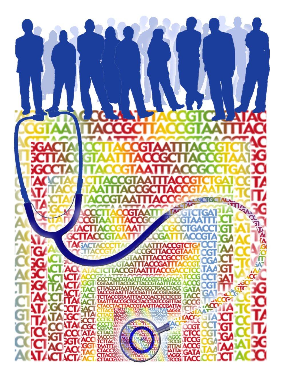 Mountain View, Kalifornia 6. novembra 2009 – Pracovníci firmy Complete Genomics vyvinuli novú aparatúru na dekódovanie DNA. Preverili ju na genómoch èiže súhrnnej genetickej informácii troch ¾udí. Priama cena za genóm klesla na 4400 dolárov.To je zatia¾ najväèšie priblíženie k sume 1000 dolárov, ktorá sa považuje za hranicu hromadného nasadenia osobnej genomiky v zdravotníctve. Na snímke grafické znázornenie základnej skutoènosti: kým genomika poslúži ako nová forma lekárskeho stetoskopu, treba sekvenova genómy ve¾kého poètu ¾udí, aby sa ich porovnaním odvodili súvislosti a stanovili diagnostické kritériá. Dosia¾ tomu bránila vysoká cena sekvenovania jedného genómu. Foto TASR - Jane Ades, NHGRI   *** Local Caption *** genomika dediènos premeny organizmy vedci biológovia zaujímavosti diagnostika Zdenìk Urban
