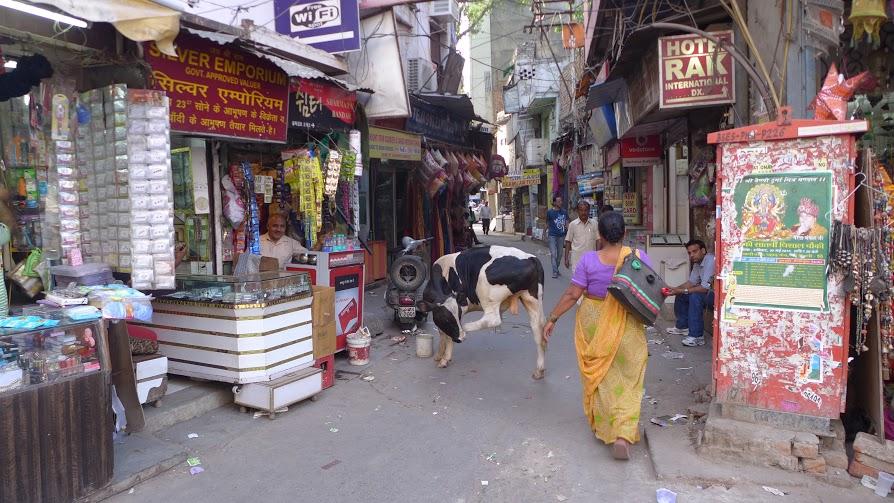 Kravy nájdete fakt všade. FOTO - AUTORKA