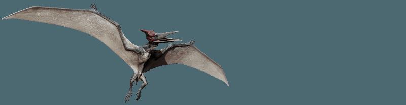 pteranodon-info-graphic