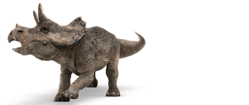 triceratops-info-graphic