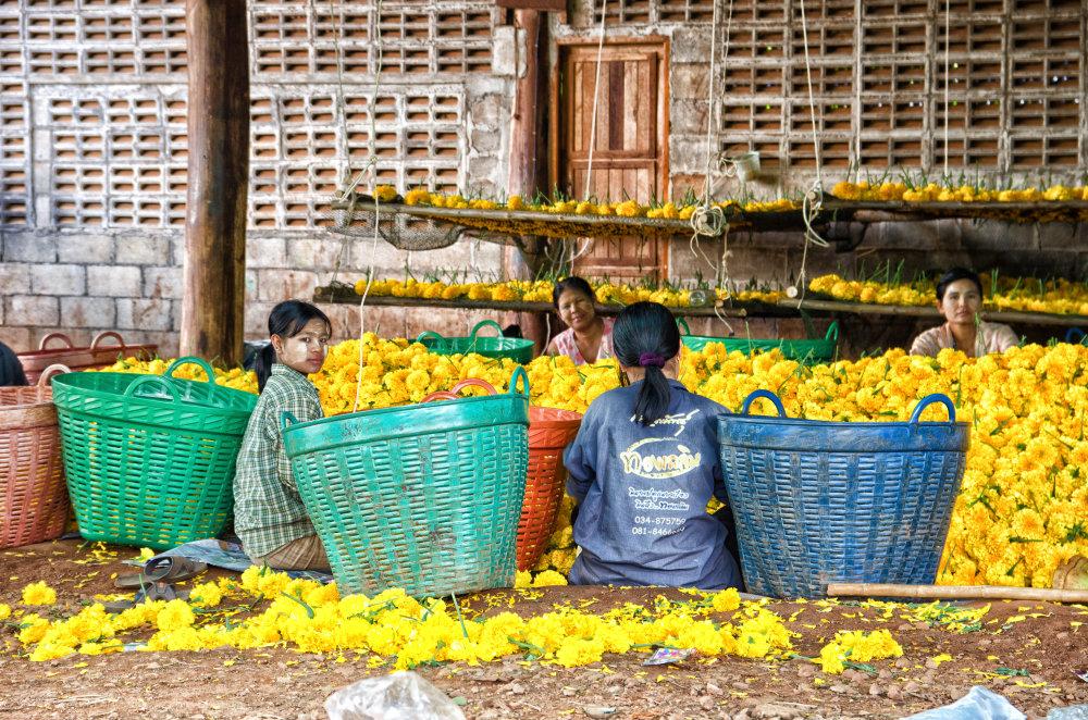 Barmské nádenníčky na thajskej farme. Foto - Tomáš Forró