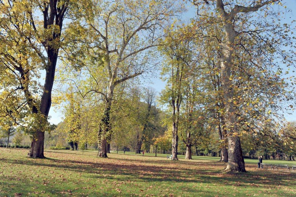 Budatínsky park v Žiline sa nachádza neďaleko hradu a Považžského múzea. Po náročnej nedávnej revitalizácií sa stal park obľúbeným miestom na prechádzky. FOTO TASR - Pavol Ďurčo