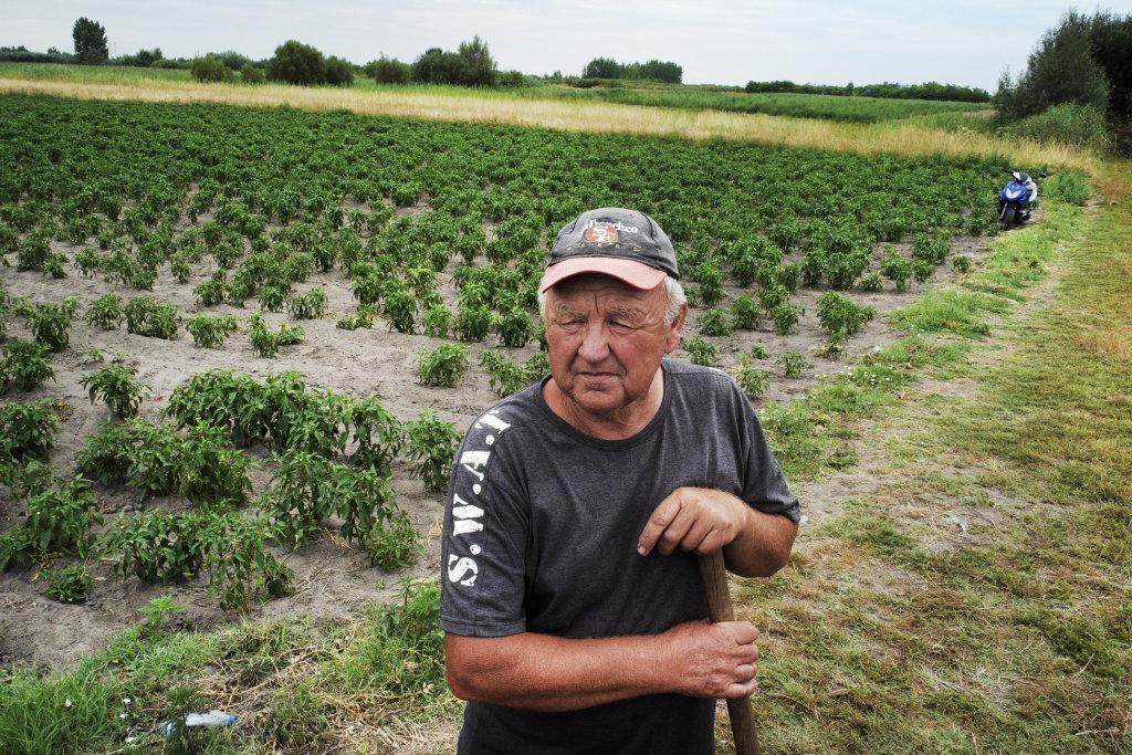 Farmár Jozef, ktorému utečenci kráčajú po paprikovom poli. FOTO PRE DENNÍK N - IVA ZIMOVA