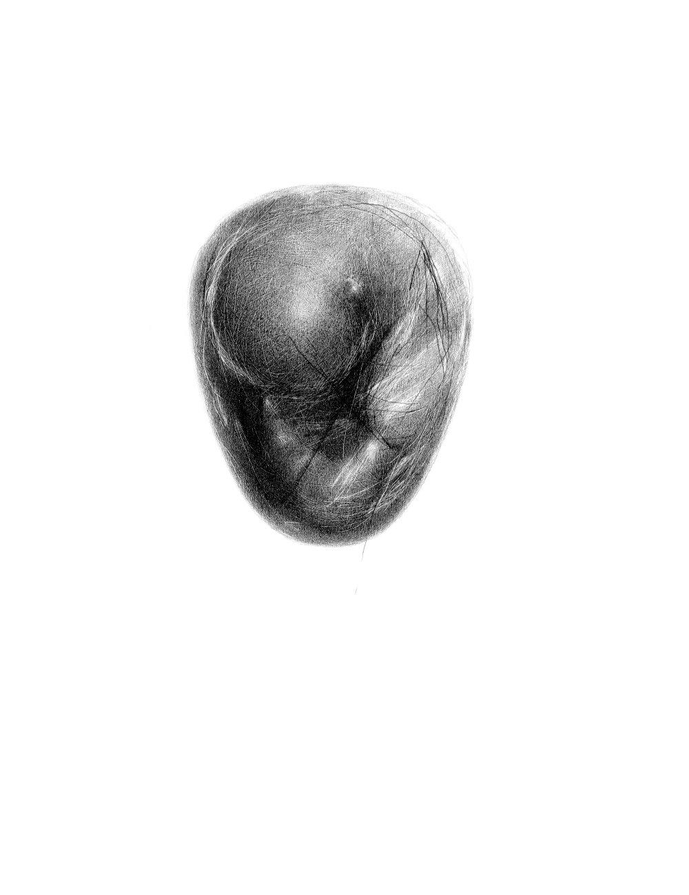 Zárodok (Ryba smrdí od hlavy), 2015, kresba ceruzkou, 390x300mm