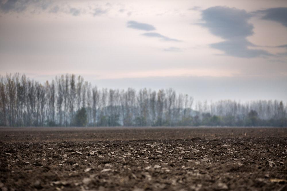 Pozemky vo Veľkých Dvorníkoch pri Dunajskej Strede. Foto N - Tomáš Benedikovič