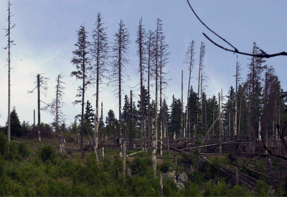 Lesy v Tatrách. foto - TASR