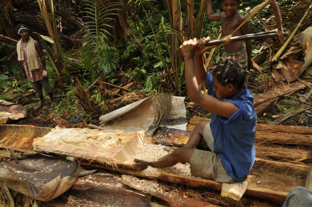 Získavanie sága z palmy na Papui Novej Guinei. To potom premyjú a získajú tak hmotu, ktorú po upražení jedia.