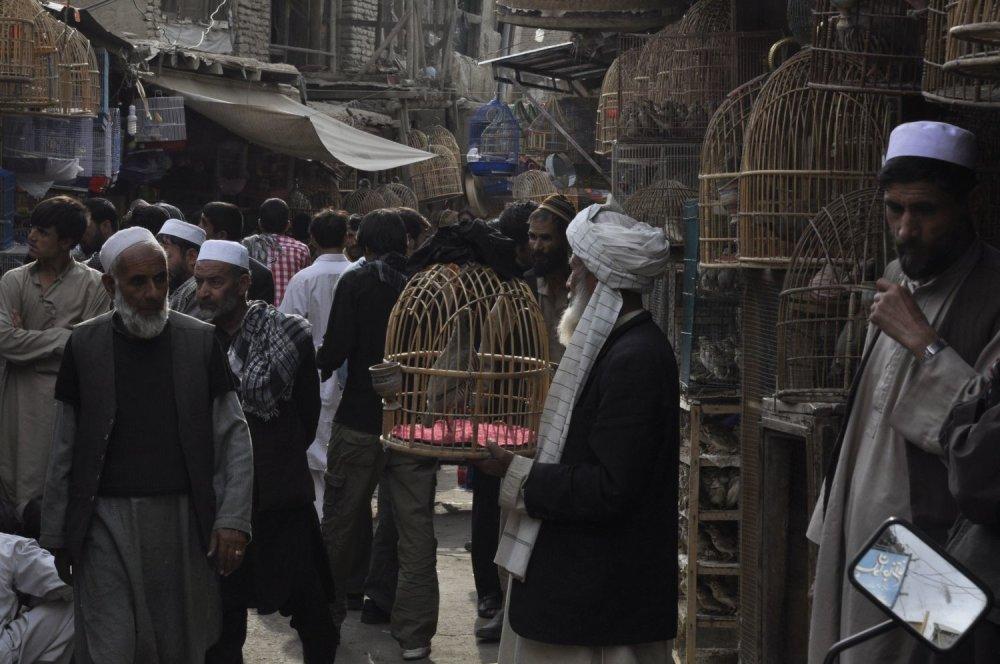 Trh s vtákmi bol pre Michala najzaujímavejším miestom v afganskom Kábule.