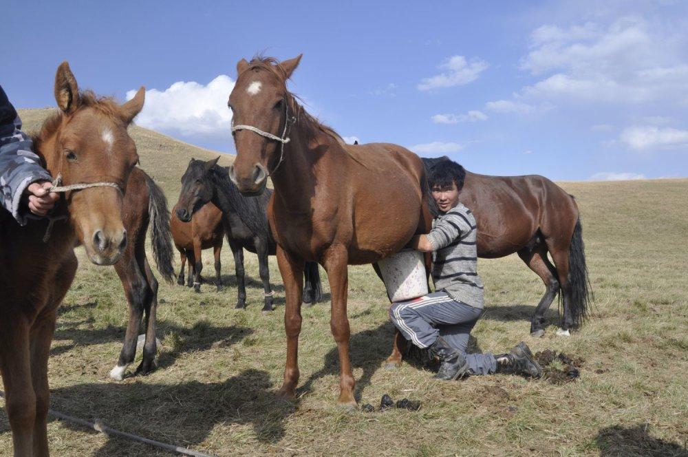 Okolie jazera Son Kol v Kirgzisku je známe jurtami a pastiermi dojacimi kumys - kobylie mlieko.