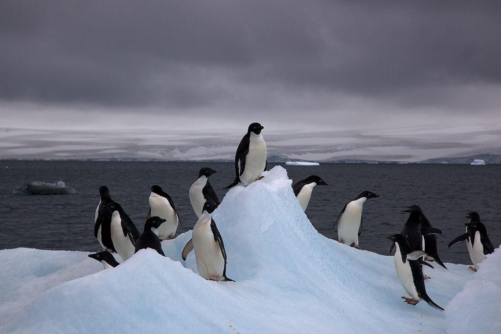 Tučniaci v Antarktíde. Foto – Wikipedia
