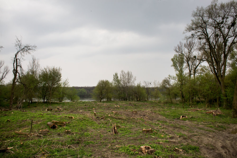 Vyrúbaný kus lesa na Sihoti. Foto N - Vladimír Šimíček