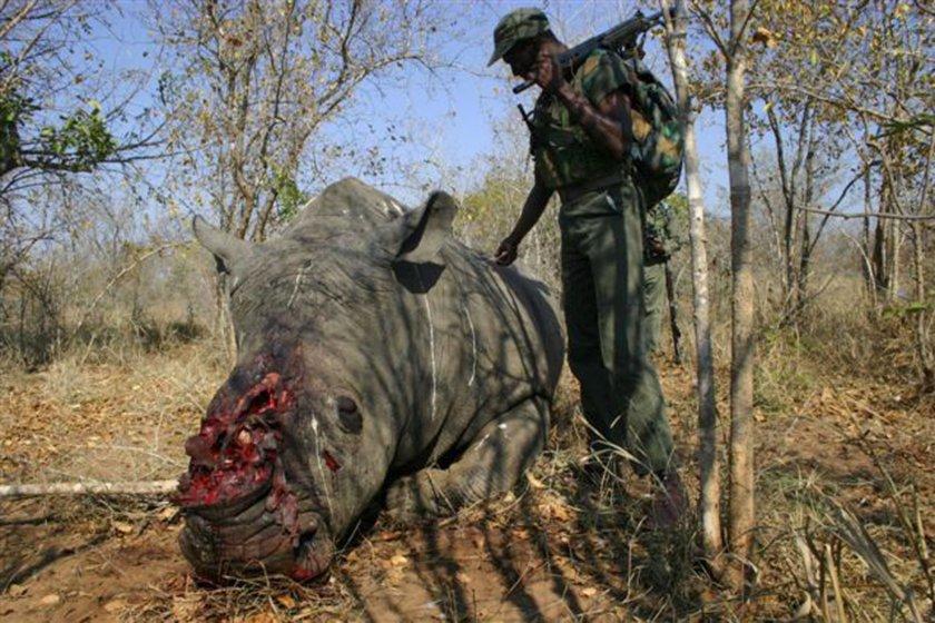 Mŕtve telo nosorožca po útoku pytliakov v Juhoafrickej republike. Foto - TASR