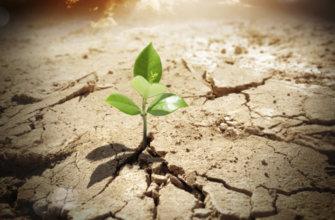 dnews-files-2015-11-miracle-plant-670-jpg
