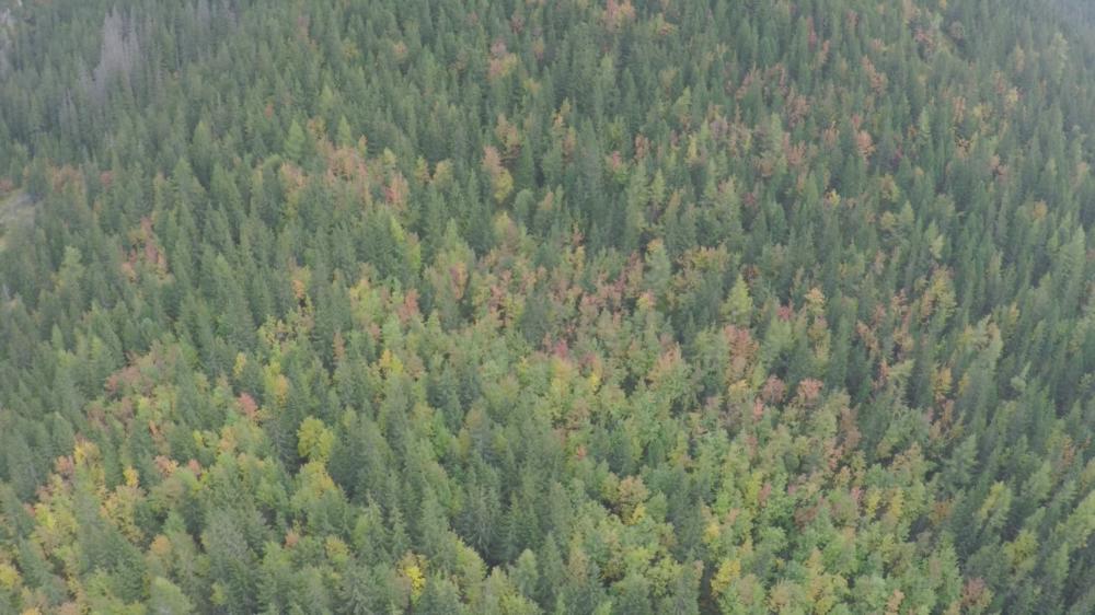 Mladý les Tichej doliny prerastajú Jarabiny. Foto - Jozef Fiala/Arolla Film