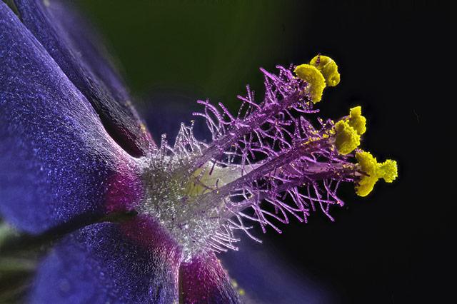 Tyčinky lúčnych kvetov. Foto - Samuel Silberman, Izrael
