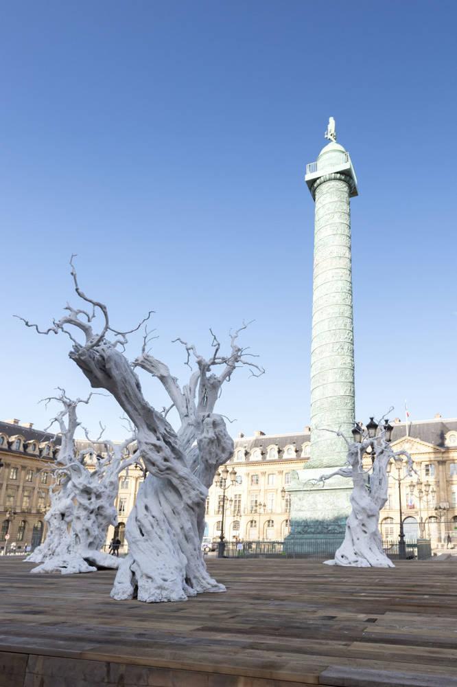 Biele olivovníky na parížskom Place Vendôme. Foto - francetvinfo.fr