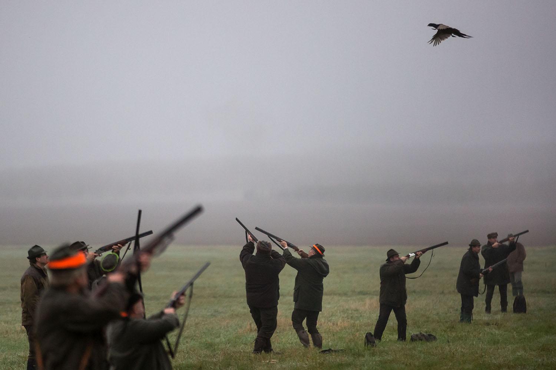 16. 11. 2016, Bříšťany. Poľovačka na bažanty. Foto N - Tomáš Benedikovič