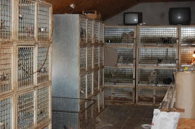 archív: Sloboda zvierat