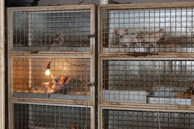 Archív: Sloboda zvierat. Šteňatá v množiarni.