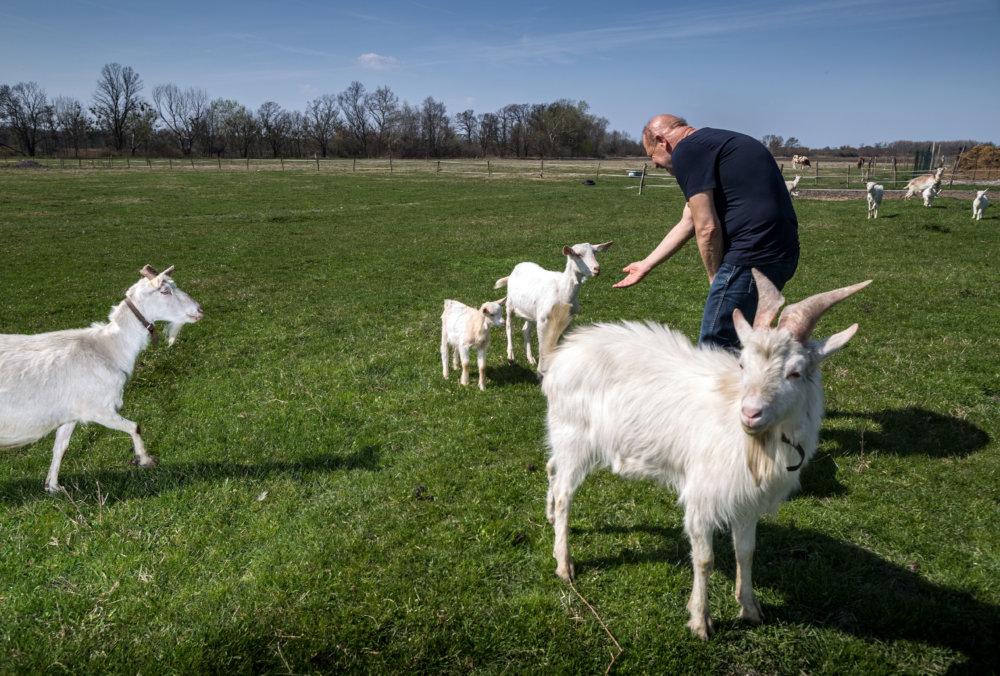 V komunite majú kravy aj kozy. O kúsok neskôr chovajú aj zajace. Foto N - Tomáš Benedikovič