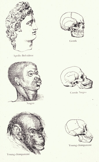 races_and_skulls